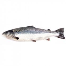Salmón entero con cabez aprox. 6kg.