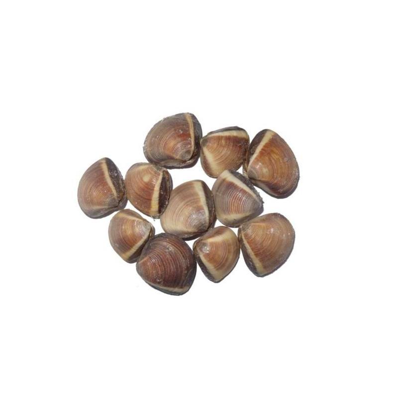 Almeja marrón bolsa 1kg.
